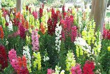 Flower beds & vegetable gardening