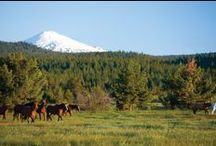 Spring at Sunriver Resort / by Sunriver Resort