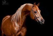 Horses / by Lori Moore