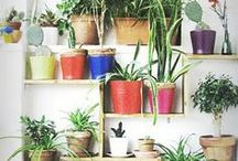 Garden / Ideas to try...one day!!!!!