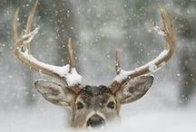 Winter | HUYS91