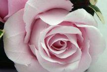 Sorority Flowers / Flowers of National Panhellenic Conference Sororities