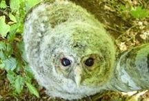 Conservation of owls // Ochrana sov / Methods, ideas, organizations and projects for conservation of owls. (especially in Europe) // Metódy, nápady, organizácie a projekty na ochranu sov. (najmä v Európe)