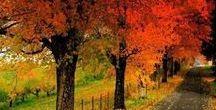 Herbstzeit / Der Herbst ist da!