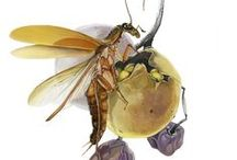 Cercle Magazine #3 – Insects