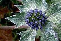 Unique Plants & Flowers