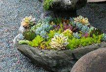 zahrada-truhlik
