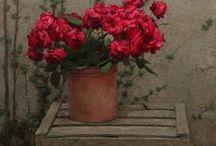 Ανθολόγιον ~ Anthology / beautiful flowers everywhere!