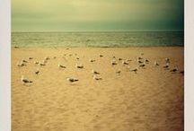 Shells - Sea - Beach