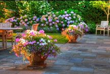 Seasonal Color / Incorporating color into the year-round landscape.
