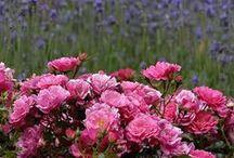 Flowers ❁ ❁❁ blooms ❁❁❁