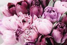 PURPLE WEDDING / Purple wedding ideas, purple wedding themes, purple wedding decoration