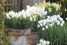 weiße Gartenpflanzen / Weiße Lieblingspflanzen