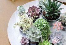Indoor Plant Inspiration