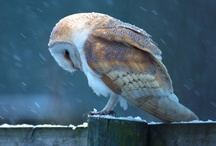 Birds  / by Anita Codeluppi