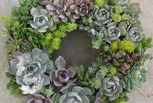 Garden / by Liane Koga