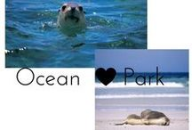 OCEAN PARK ADVENTURE / Fun day with sea lions and penguins! :)