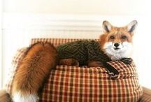 Foxes are lovely creatures