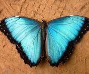 La Serre Aux Papillons / La Serre aux Papillons est un parc animalier situé à La Queue Lez Yvelines, mettant en scène des lépidoptères exotiques. Ouverte en 1989, elle est la plus grande serre à papillons de France,accueillant chaque année autour de 55 000 visiteurs. Contrairement à la majorité des parcs animaliers, les visiteurs sont en contact direct avec les animaux puisqu'ils se promènent au milieu des centaines de papillons en liberté. Nous allons vous faire partager notre passion au travers de ces clichés.