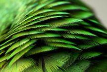 Color 2013: Emerald