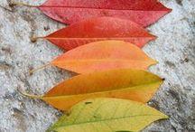Autumn Leaves / by Toni Edgemon