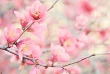 La vie en rose / Preciosas imágenes en... ROSA