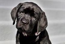 Doggies!!! / by iamdhi