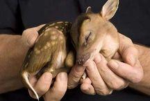 Dieren..GROOT en klein... / Ik hou van dieren, ik haat mensen die dieren mishandelen... / by Micheline Adamandopoulos