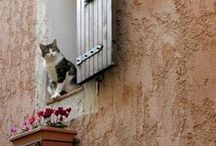 Favorite Cat Photos / cats, Europe cats, travel cats, window cats