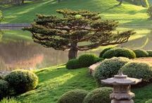 ...Dream Garden...