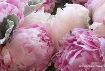 natur gedöns / Blumen