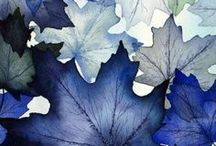 Blue / Blue is my favorite color