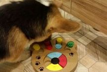 #pets #joy / This board is all about #pets and their care I will share the stuff i get for my pets to play train or rest and the world can check them as well.