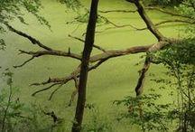 Toos van den Bosch-Dael / Bomen