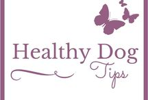 Dog - Holistic and Healthy Tips / Holistic, Homeopathy & Natural Tips for Dogs