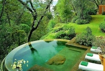 Plants, Pools & Patios / Paying hommage to beautiful plants, pools and patios worldwide.