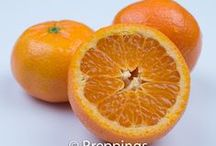 Citrus Fruit / Search Preppings culinary ingredient dictionary for a list of citrus fruits.  Search cooking uses, flavor profiles and similar ingredients to inspire culinary creativity. @ preppings.com