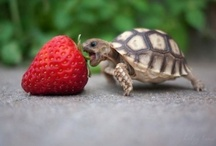 Turtles are cute :3