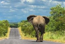 (+263) Homeland #ZW / Where I come from....Zimbabwe