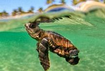 Love baby turtles