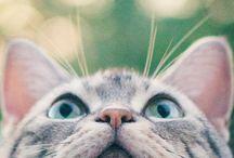 CAT-I-TUDES / by Christy Dahlberg