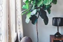 Indoor Plants and Home
