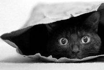 Tiere | Katzen