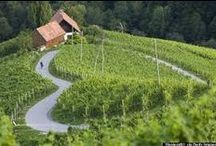 Wine / Traditional Slovenian wine