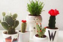 Inspiration | A Cactus a Day