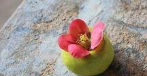 Cecile Daladier / Flowers and ceramics
