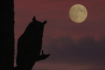 Moon / Moonrise and Moonlight Kingdom...