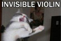 Cats / *cat intensifies*