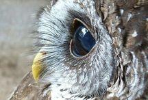 hOOo hOOo... Owls!