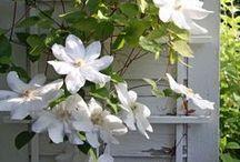 ~✿ڿڰۣ✿~Garden~✿ڿڰۣ✿ No 2 / Garden No2 / by ★ Marina M ★